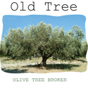 Discount olive trees