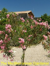 25_watermark_350x275_oleander-small