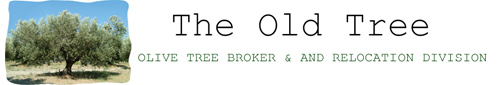 Olive tree discounter
